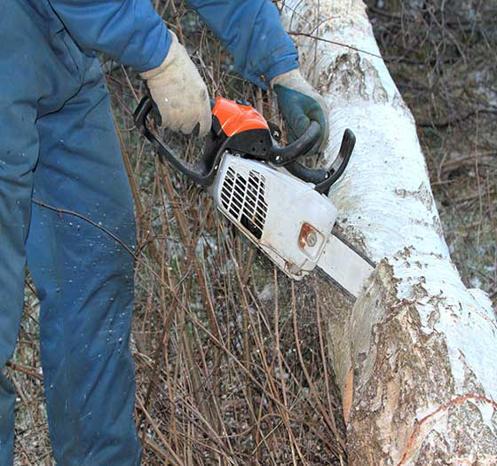 using a chainsaw on a tree